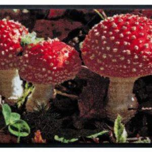 Évszakok prémium lábtörlő – gombák