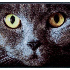 Állatos prémium lábtörlő – szürke cica