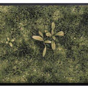 Virágok és levelek prémium lábtörlő – moha